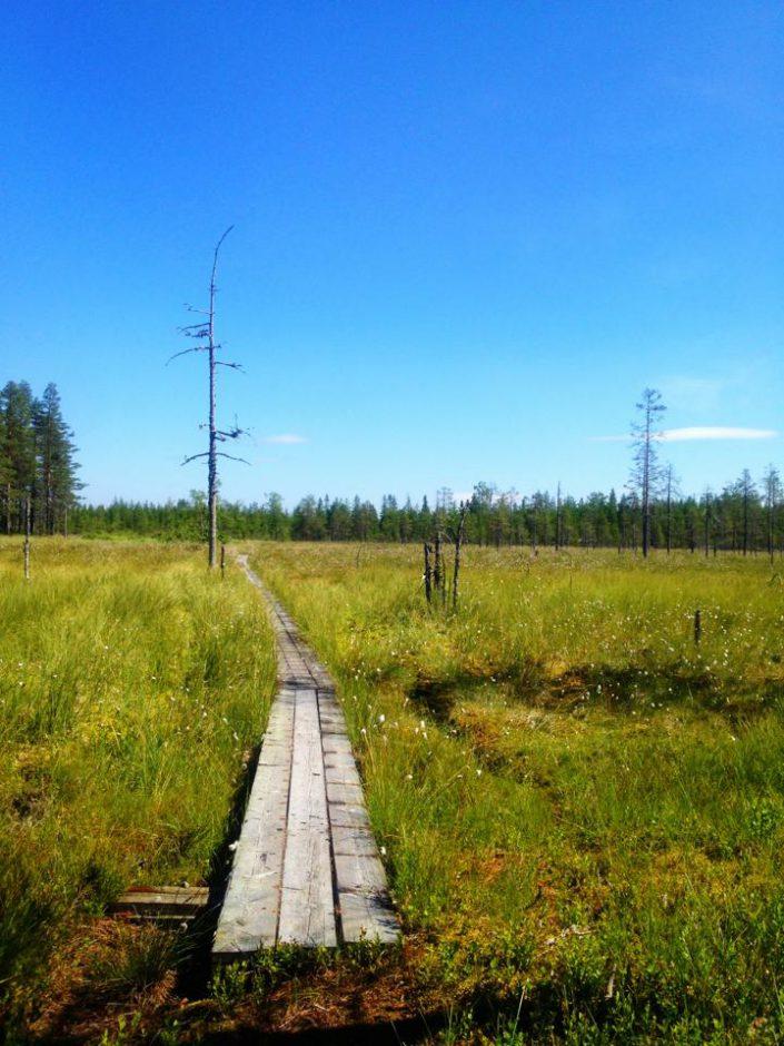 Från niomilalöpningen mellan Sälen och Mora, sommaren 2013.