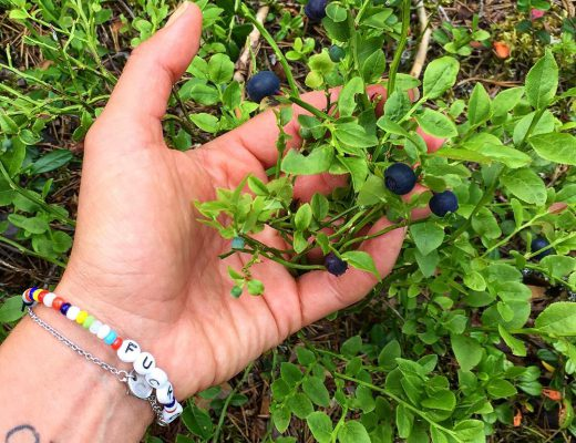 One of many positive things with #trailrunning: wild blueberries as #afterrun treat  #blueberries #blåbär #dalarna